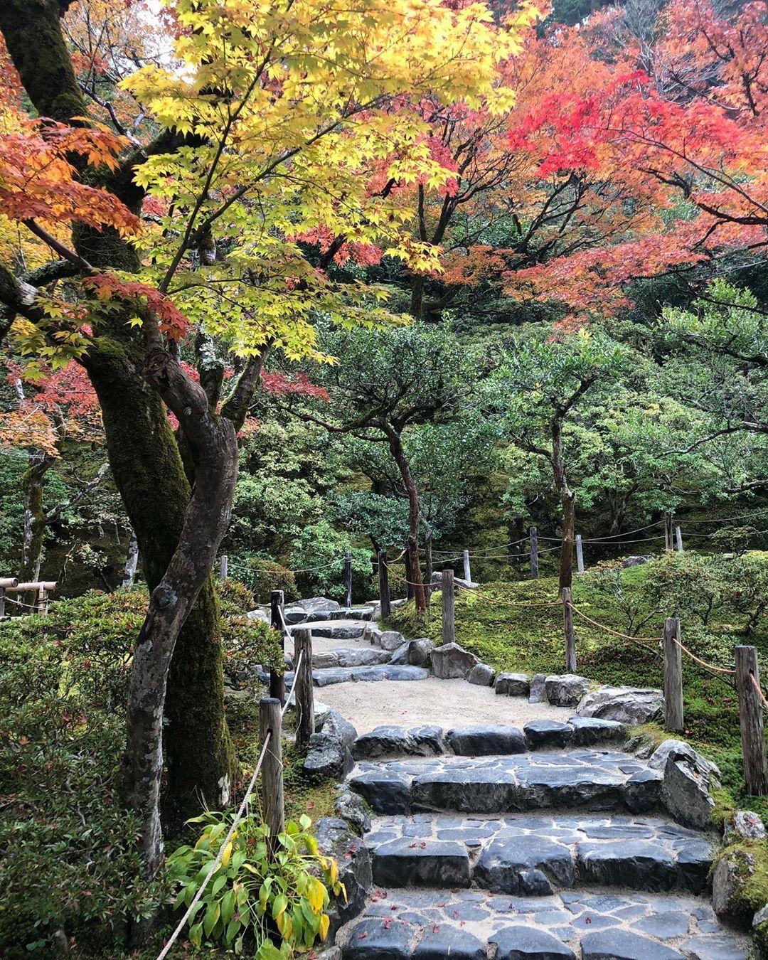 Ginkakuji temple foi um destino que nos surpreendeu, lá é lindoo demaiss 😍❤️ mais lindo que nas fotos que vimos antes de ir .  .  .  .  .  #japan #japao #nippon #japantrip #japantravel #travel #trip #pic #ginkakuji #ginkakujitemple #kyoto #autumn