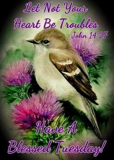 Tuesday blessings morning blessing pinterest blessings tuesday blessings tuesday greetingsbeautiful birdsblessings m4hsunfo