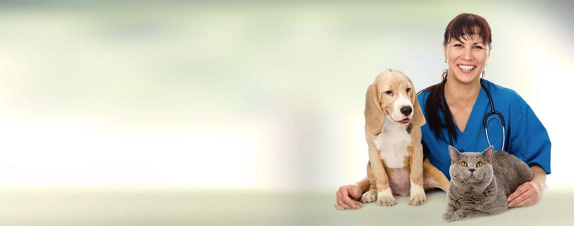 Animal Care Clinic Of HHI Veterinarian In Hilton Head