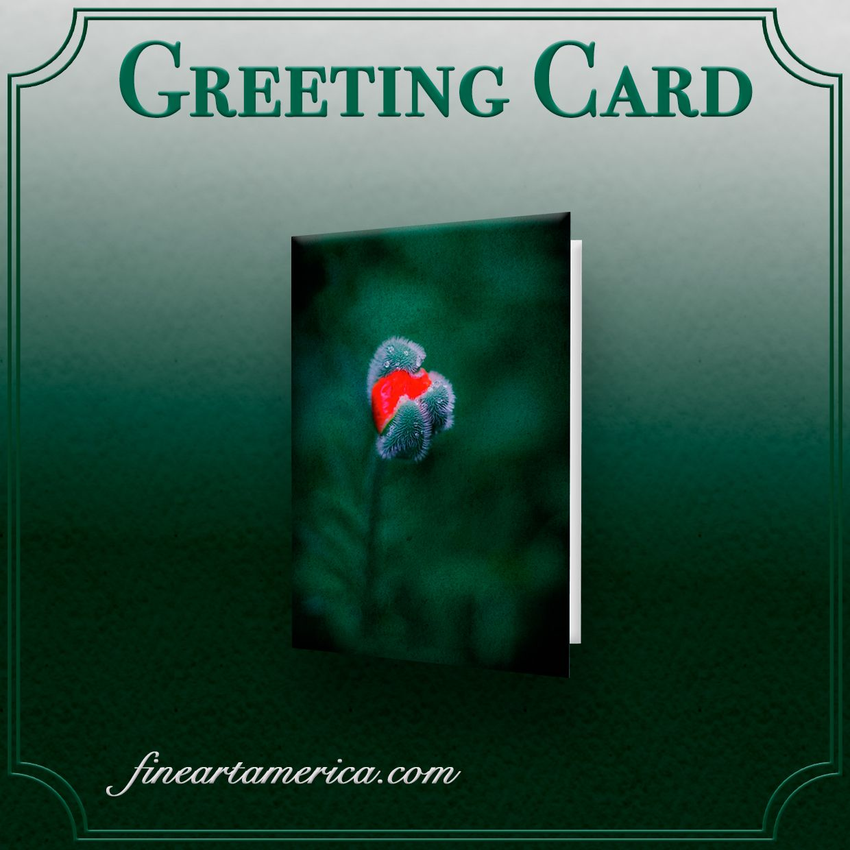 GREETING CARD Scarlet poppy bud with drops of water Dark green background  photography