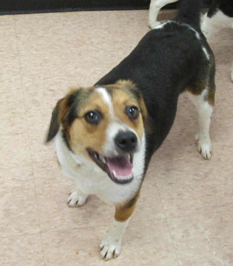 12++ Murray county animal shelter ideas