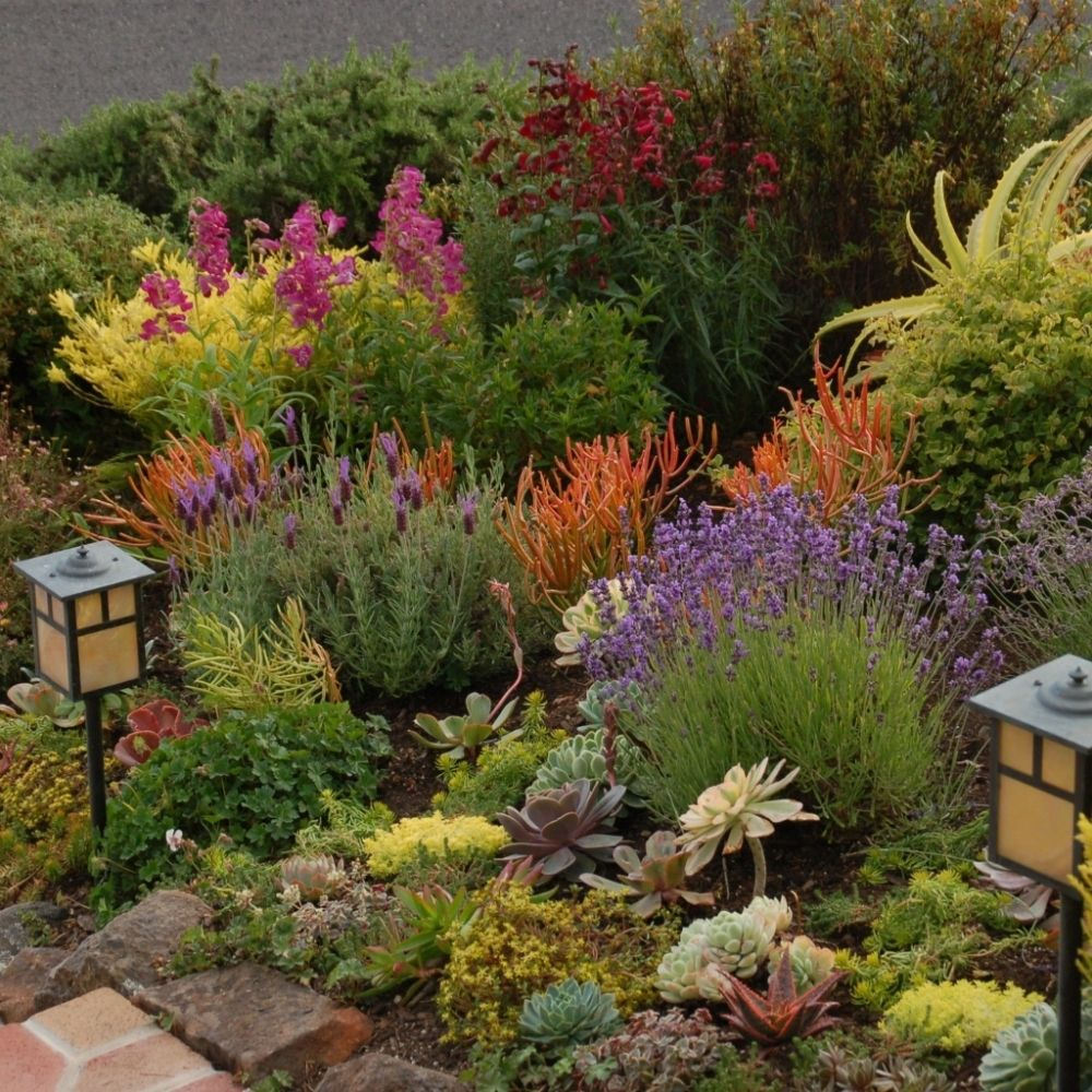Drought Tolerant Landscaping Photos: Association Of Professional