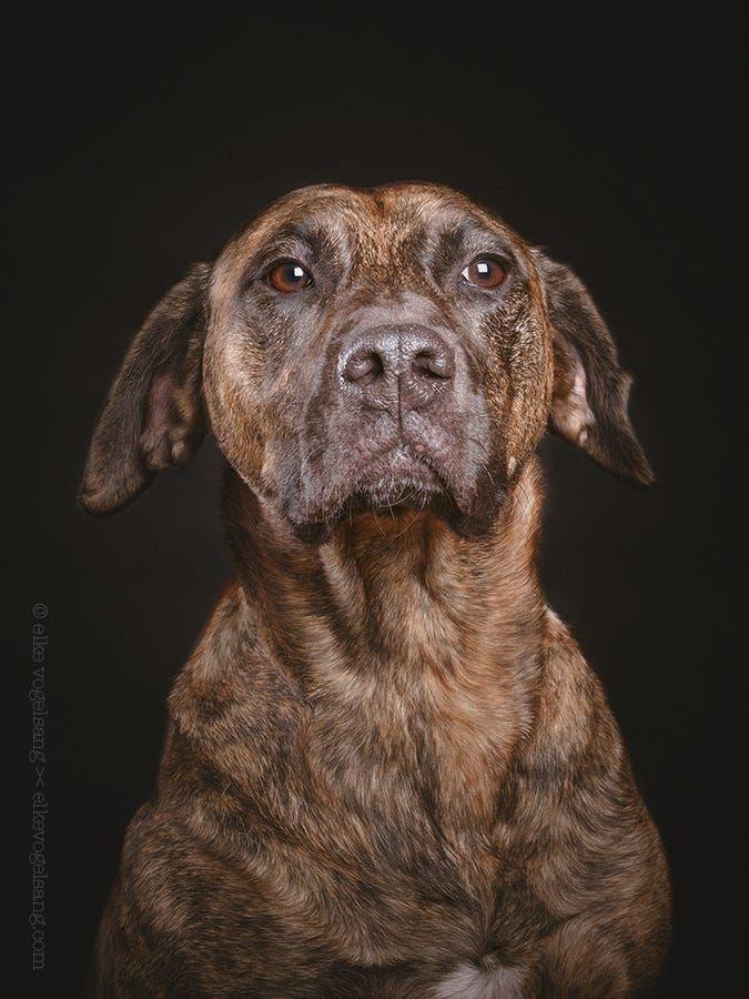Adopt 13 1224 Skittles On Pitbull Terrier Animals Animal Shelter