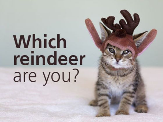 we all know about rudolph but what about the others vixen apparently i am fun christmas quizfunny