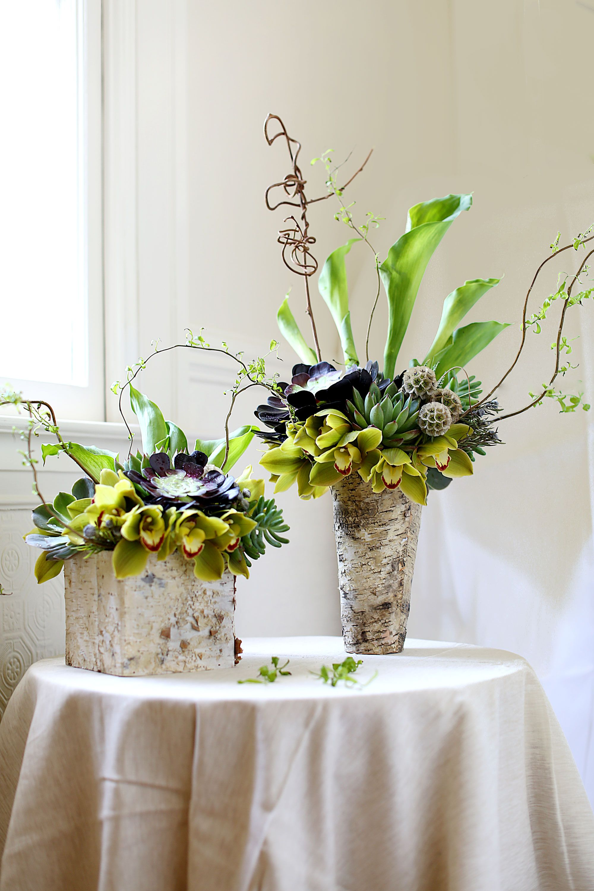 Aeonium Succulents Arrangements With Cymbidium Curly Willow Tip Calla Lilly Leucodendron Scabiosa Pod Cymbidium Orchids Colorful Wedding Flowers Orchids