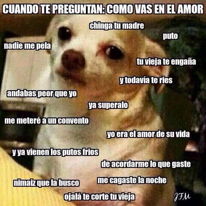 Cómo Vas En El Amor Bad Memes Cute Memes Love Memes