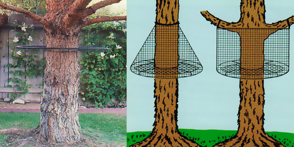The Tree Guard Prevents Cats From Climbing Trees Or