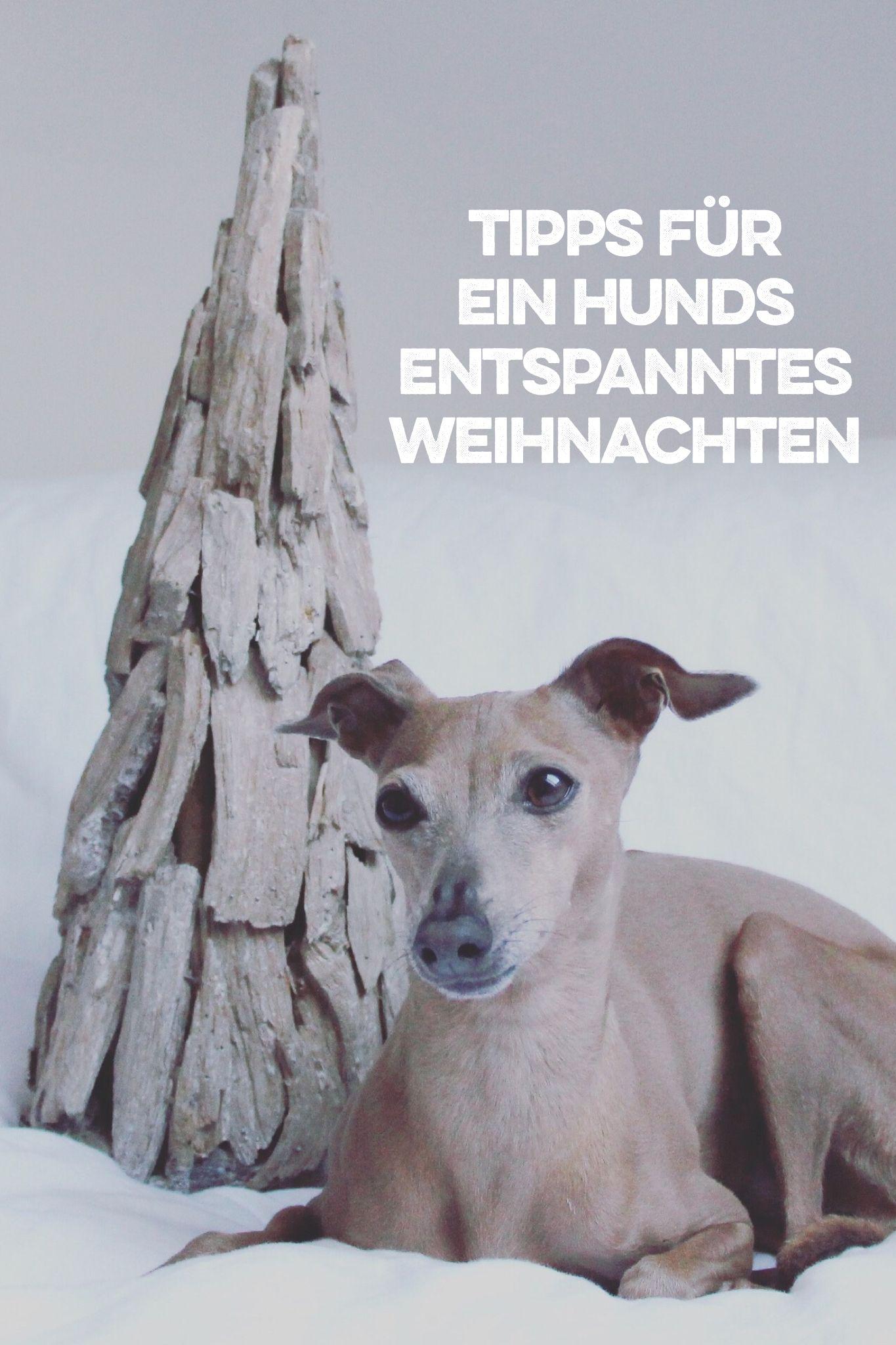 So wird Euer Weihnachten hundsentspannt [Anzeige] | Hunde ...