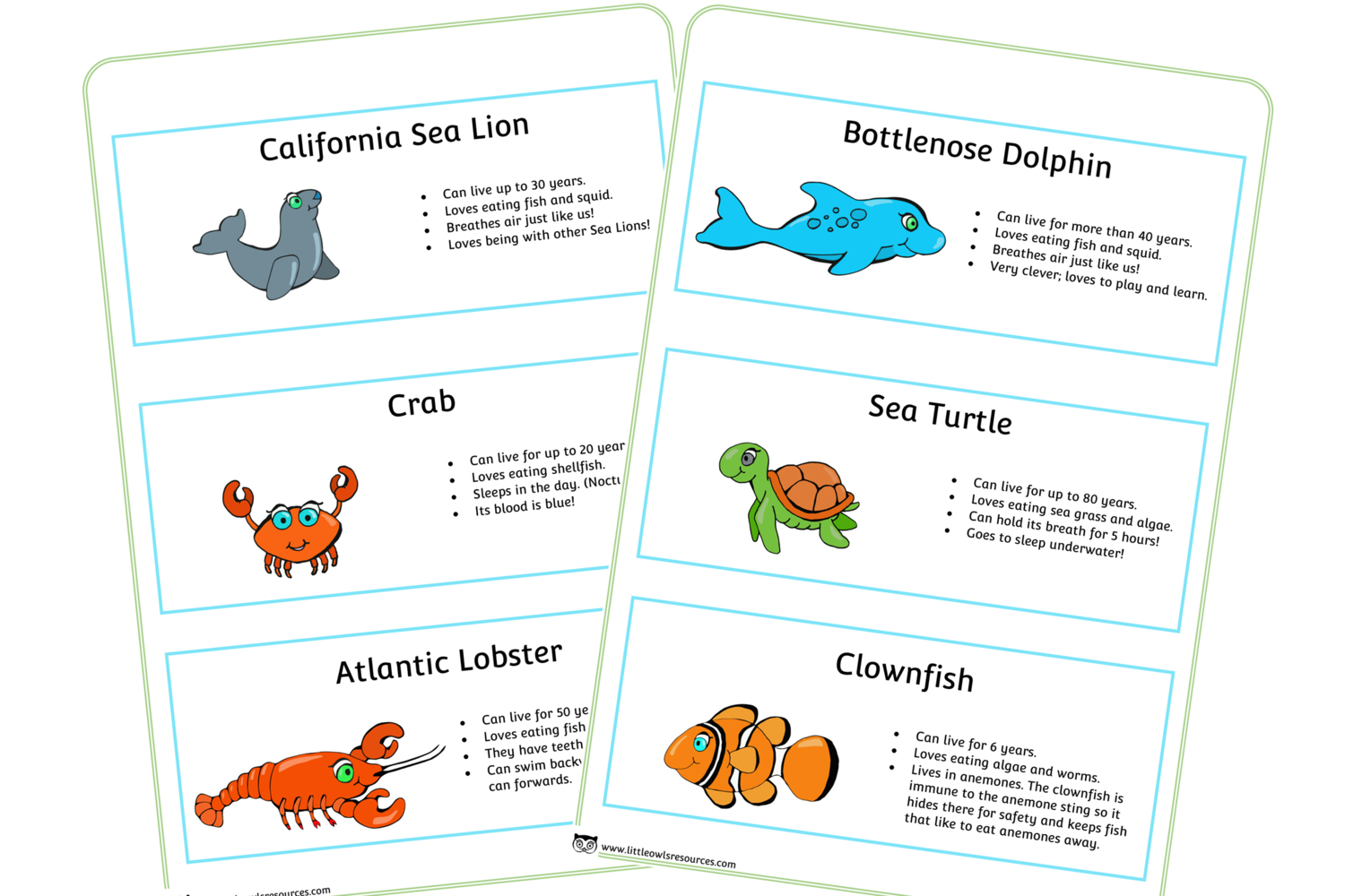 Free Sea Animal Fact Cards Early Years Eyfs Printable
