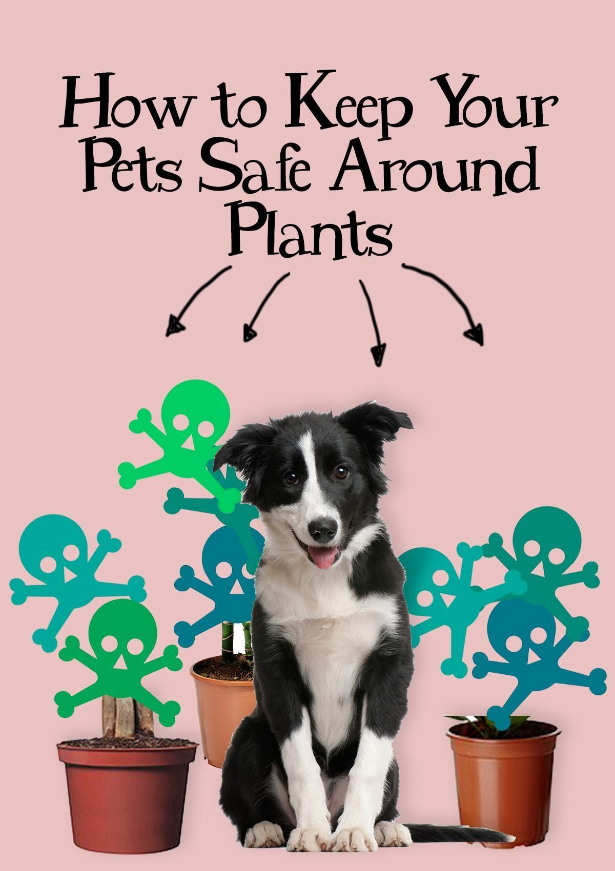 How to Keep Your Pets Safe Around Plants Toxic plants