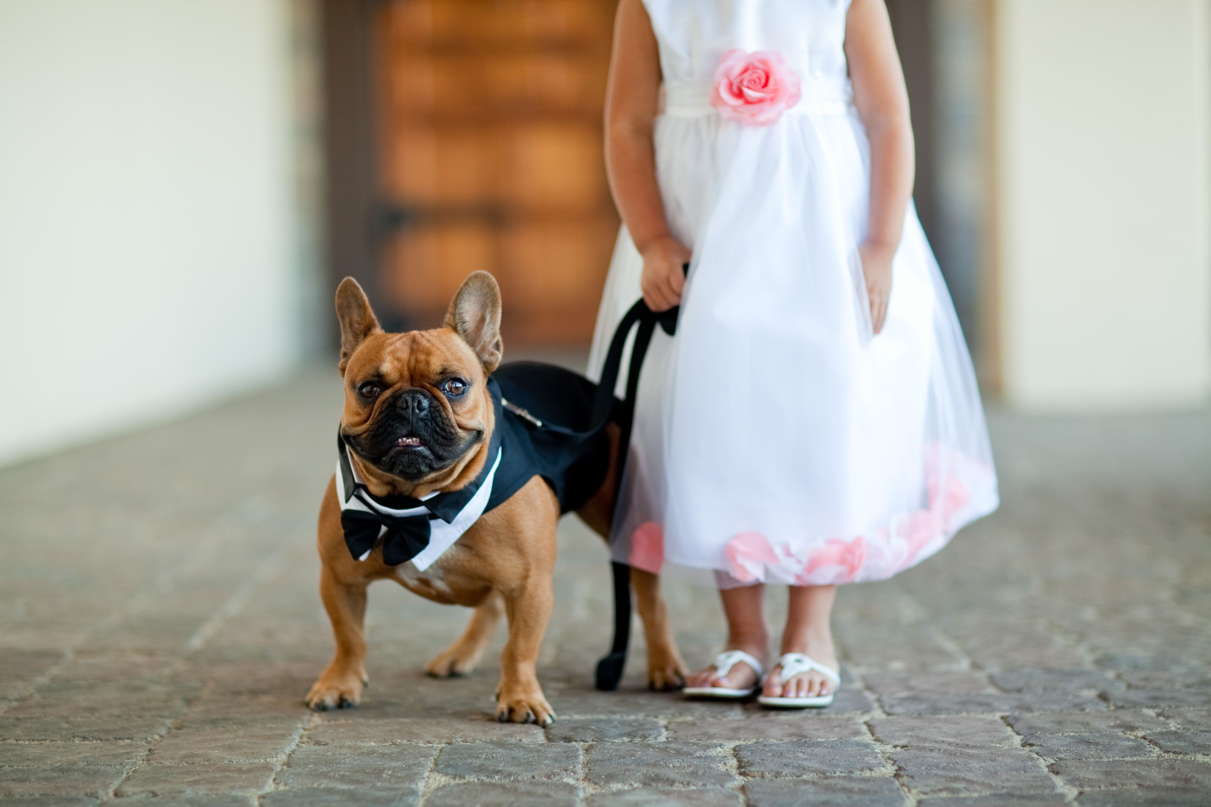 Frenchie Ring Bearer 3 Dogs And Kids French Bulldog Bulldog