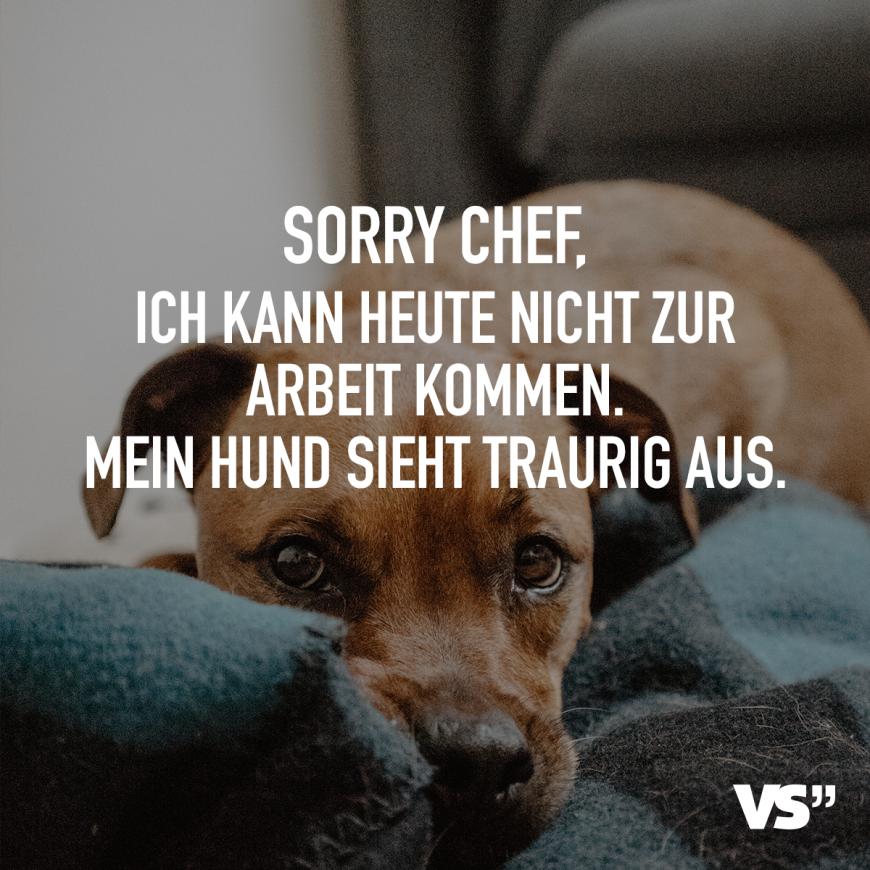 Sorry Chef Ich Kann Heute Nicht Zur Arbeit Kommen Mein Hund Sieht Traurig Aus Visual Statements Hund Witze Hund Zitat Traurig