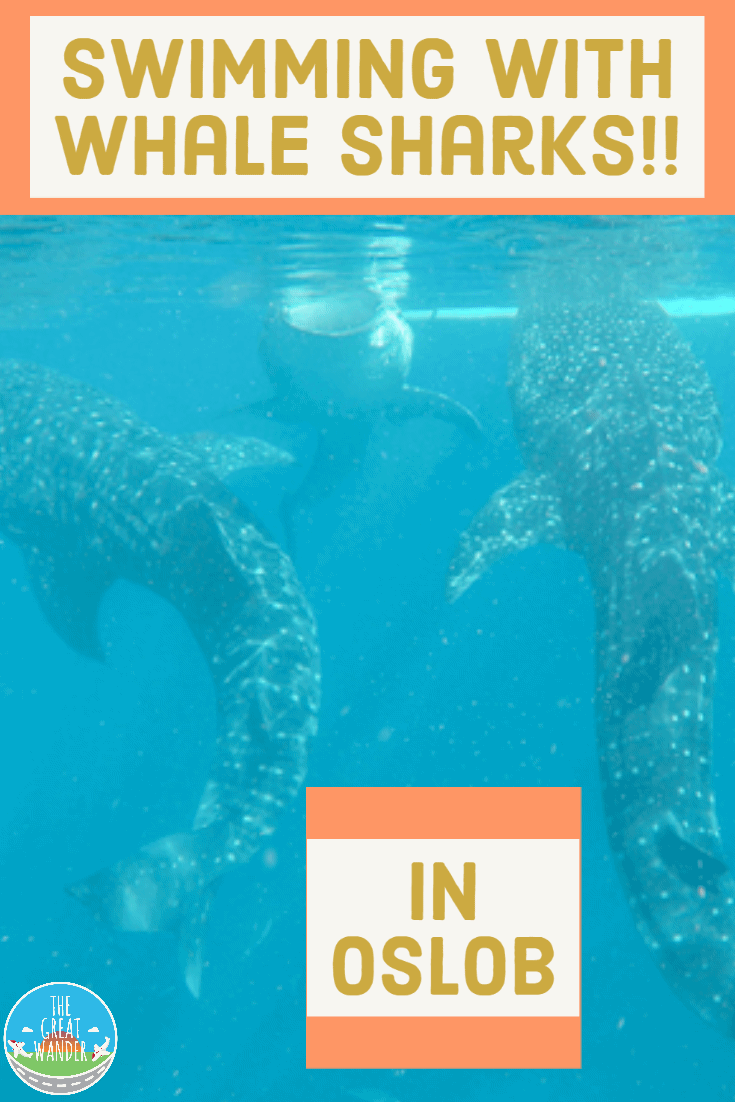 Swimming With Whale Sharks In Oslob In 2020 Swimming With Whale