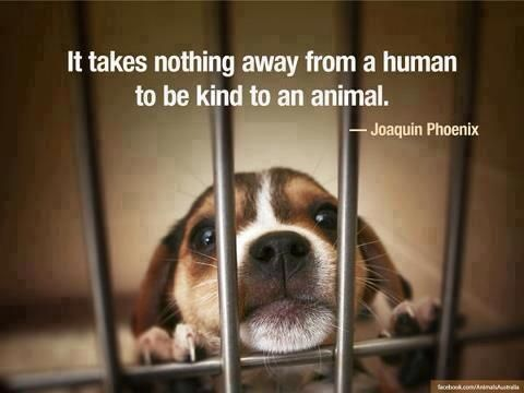 Pin By Lily Ramirez On Rights For All 3 Animals Animal Quotes Pets