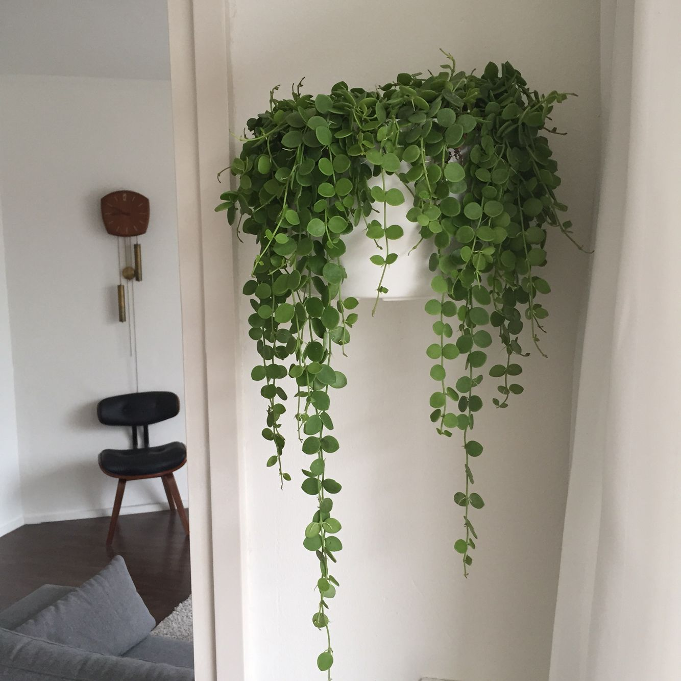 Wall plant Decoration