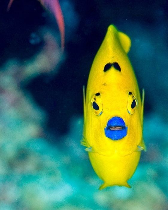 Blue Lipstick! Most Beautiful Unseen Sea Creatures Seen On www ...