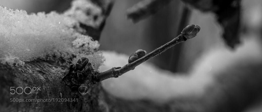 #photography Winter by FooJFoo https://t.co/ekbsGfofG7 #followme #photography