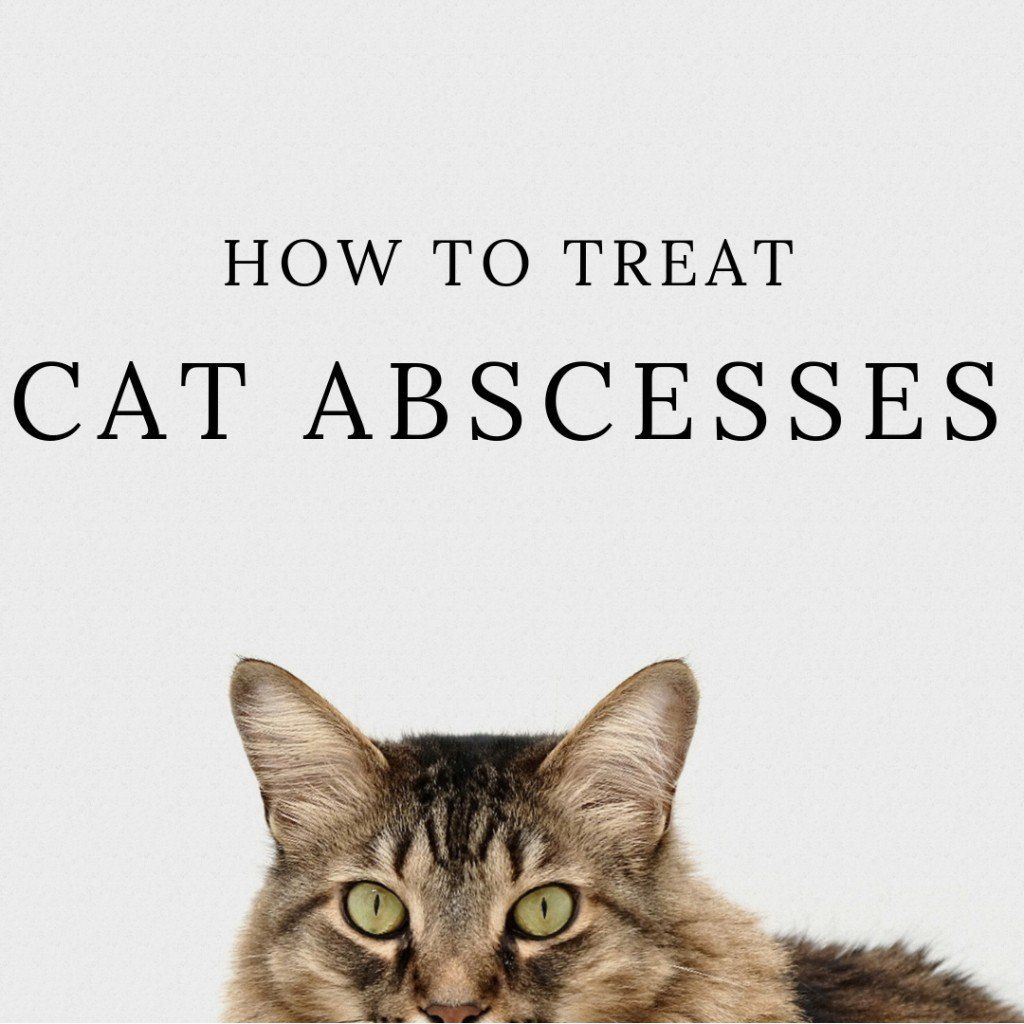 How to Treat Cat Abscesses at Home Cat biting, Cats, I