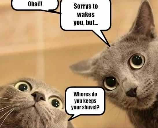 Cat waking you up Funny cat pictures, Funny pictures