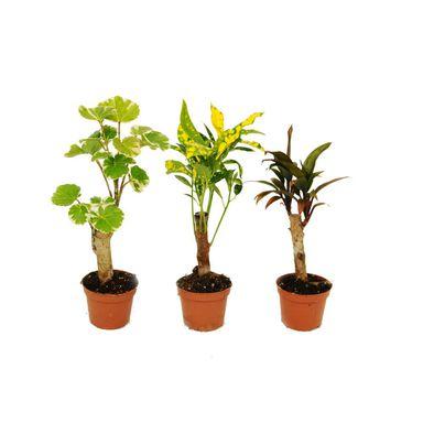Rosliny Zielone Na Pniu Mix 10 Cm Kwiaty Doniczkowe W Atrakcyjnej Cenie W Sklepach Leroy Merlin Planters Plants Planter Pots