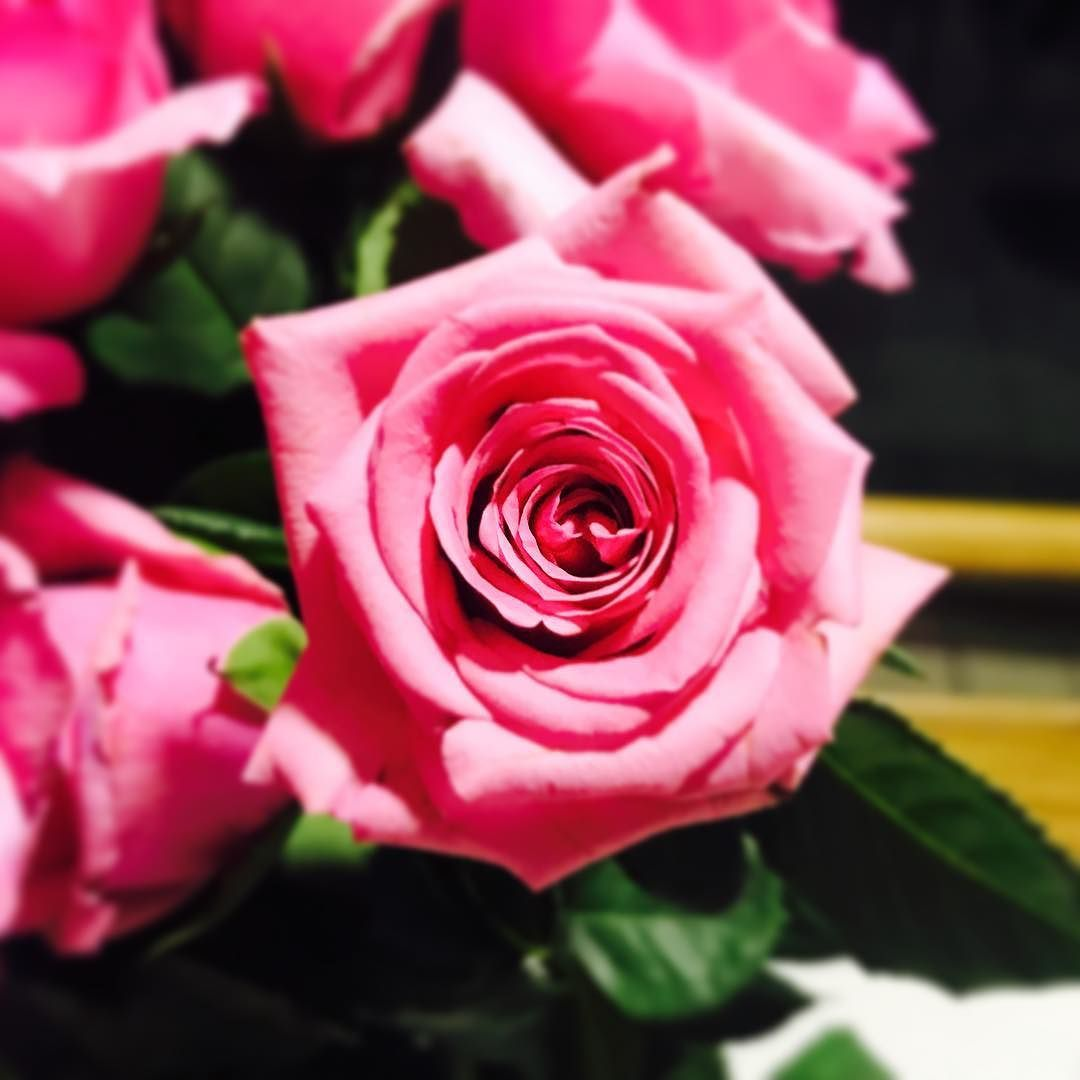 Anything is possible with sunshine and a little pink #pink #loveit #flowers #rosesroses #makemesmile