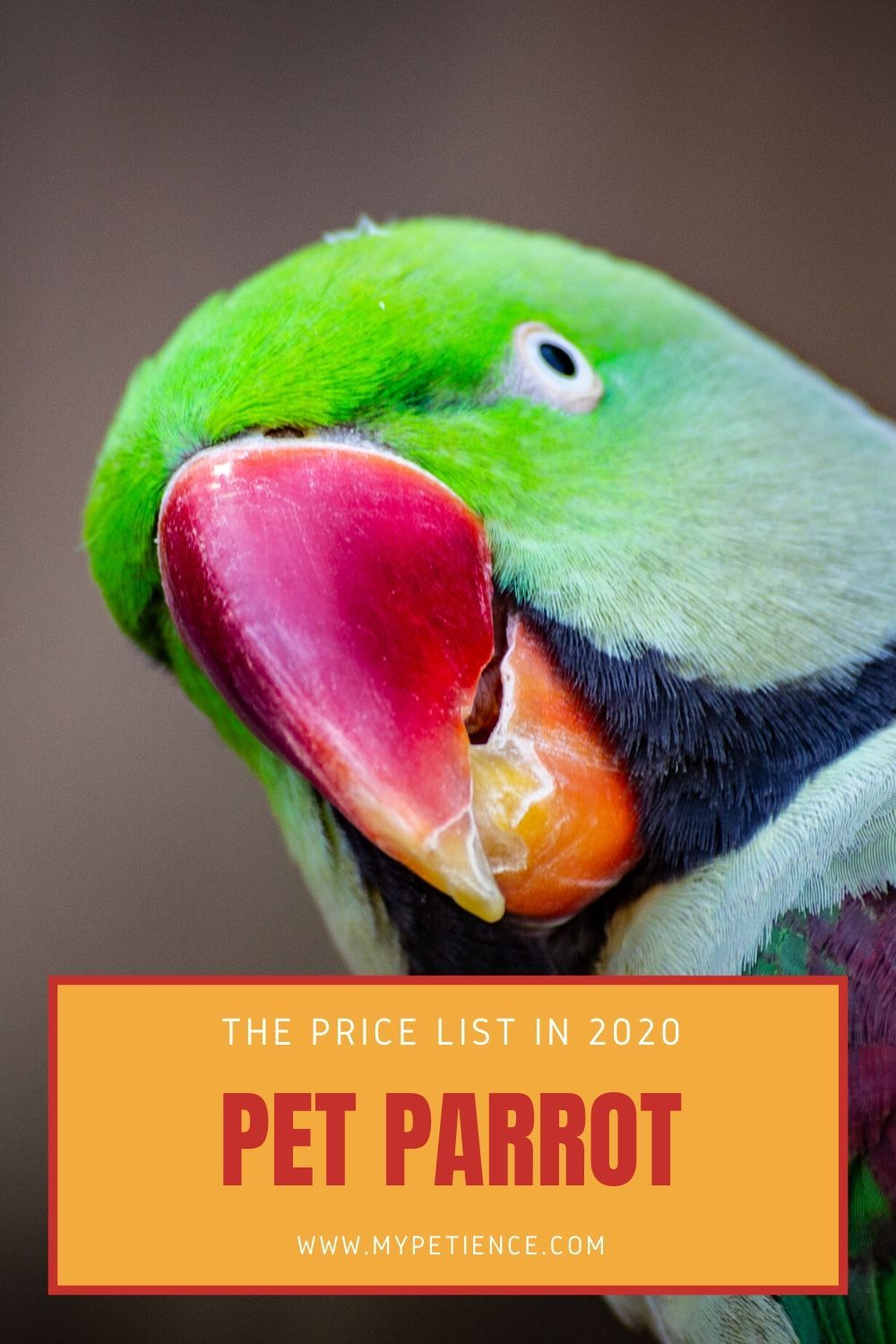 How Much Is a Parrot to Cost in 2020? in 2020 Parrot