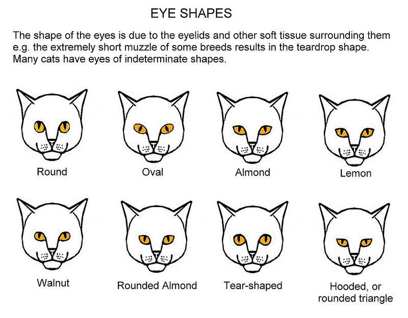 Eye Shapes   Cat eye colors Eye color chart Cat behavior