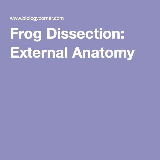 Frog Dissection External Anatomy Guide Hs Science Biology