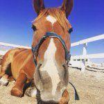 Instagram photo by horsetrekkingparktateyama