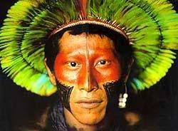 native brazil - Pesquisa Google