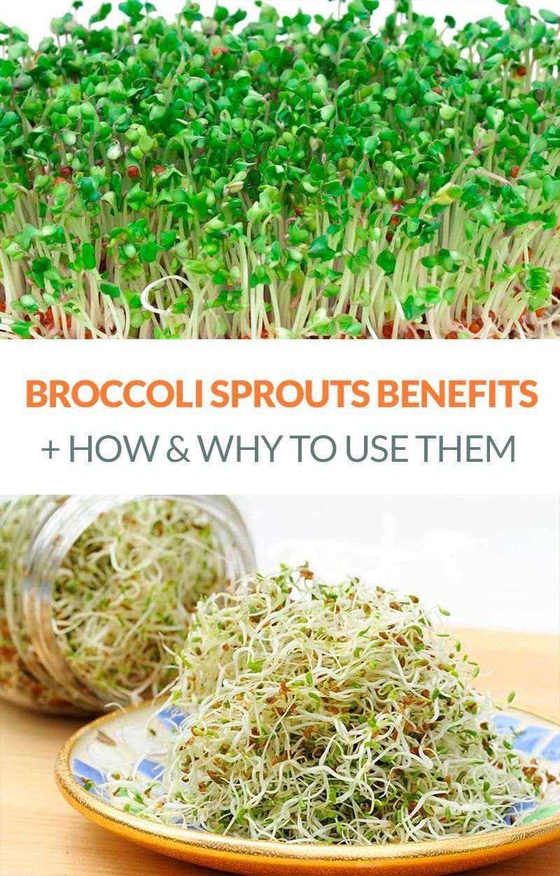 Exceptional Health Information Are Offered On Our Web Pages Read More And You Will Not Be In 2020 Coconut Health Benefits Sprouts Benefits Broccoli Sprouts Benefits