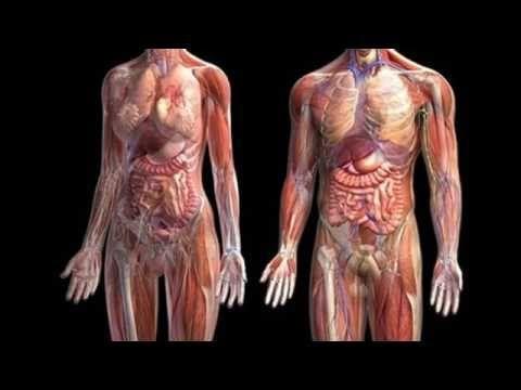 ANATOMIA Y FISIOLOGIA HUMANA 3D - YouTube | Anatomía | Pinterest ...