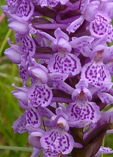 Iospe Photos Beautiful Orchids Orchid Flower Fragrant Flowers