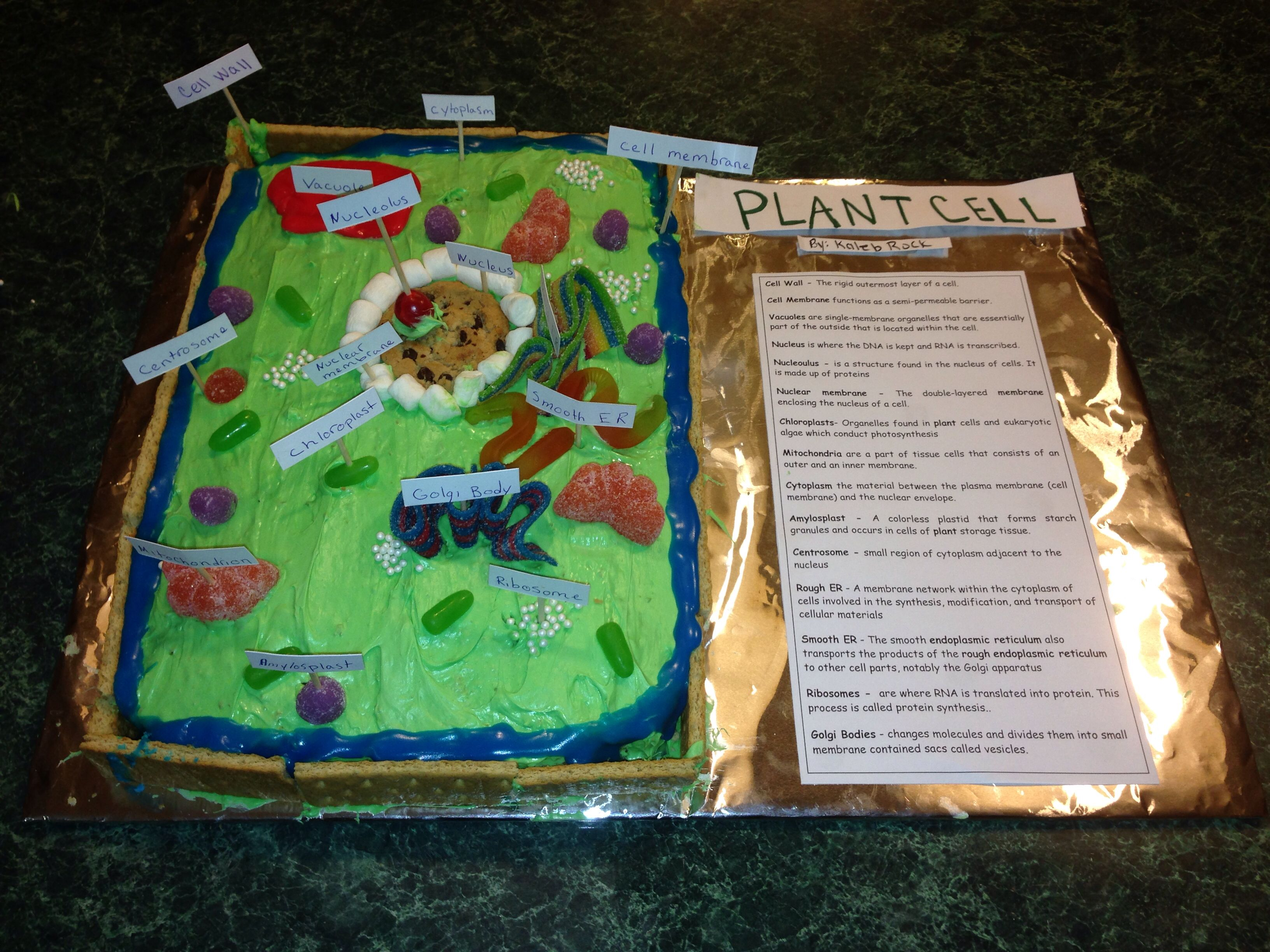 Edible Plant Cell 5th Grade Project