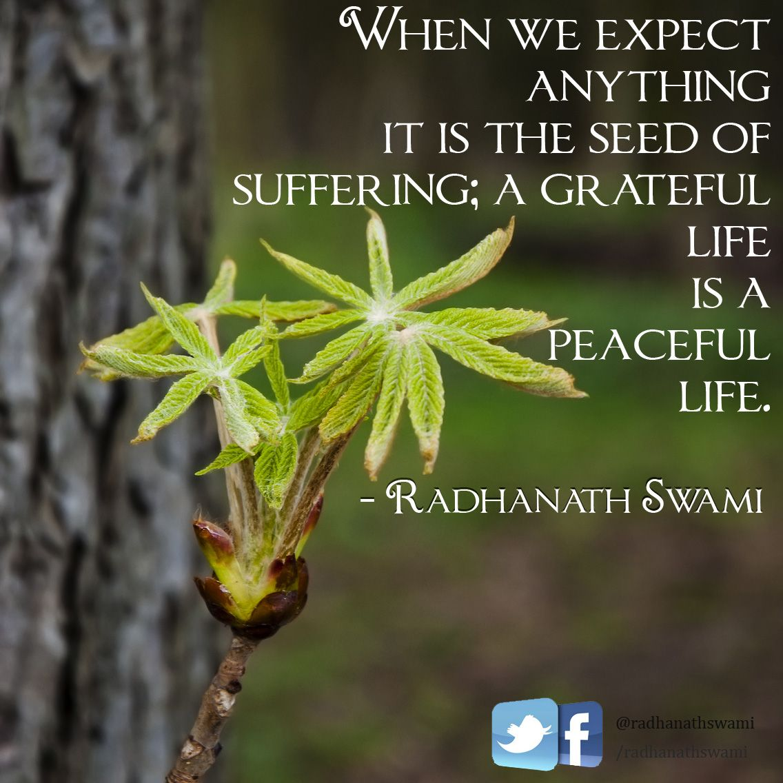 When We Expect Anything It Is The Seed Of Suffering; A Grateful Life Is A
