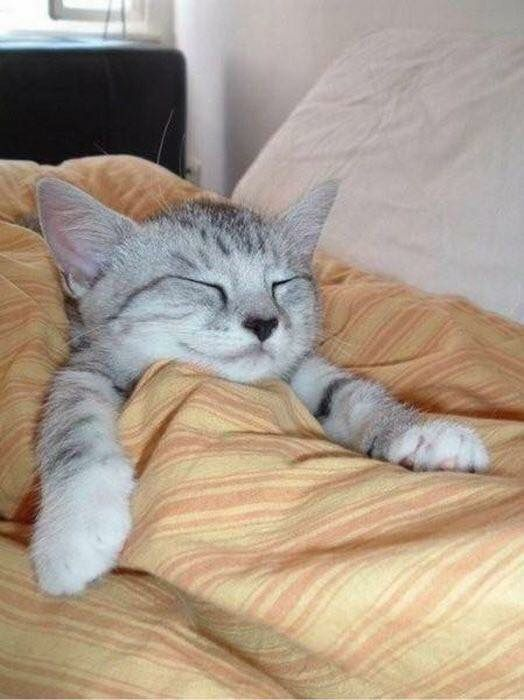 Kitten Tucked In And Sleeping Funny Cat Pictures Funny Cats Sleepy Cat
