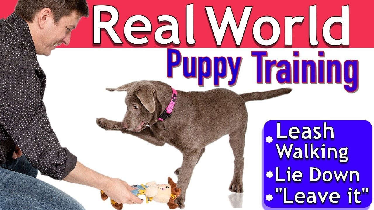Easy Puppy Training 3 Things 1 Session Leash Walking Leave It