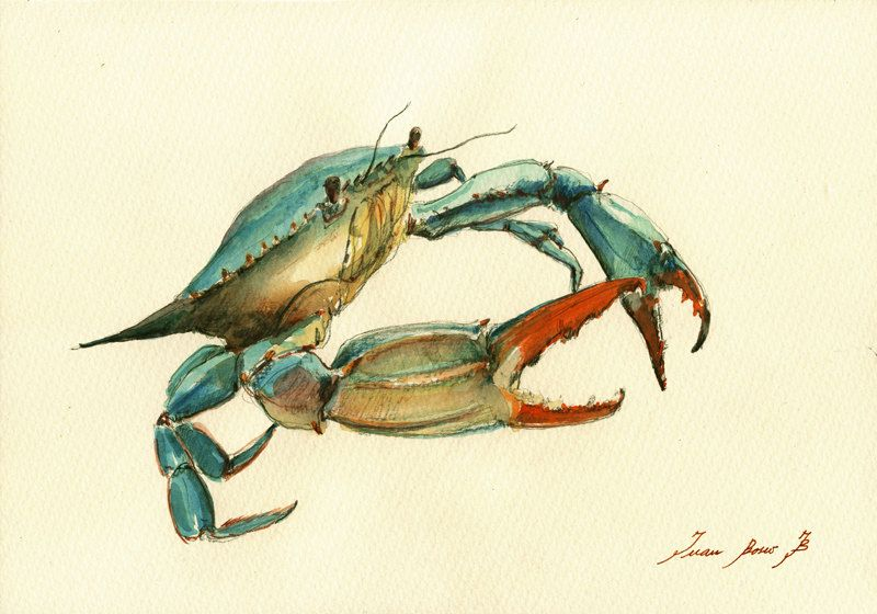 Print Blue Crab Decor Print Watercolor Painting Art Wall Sea