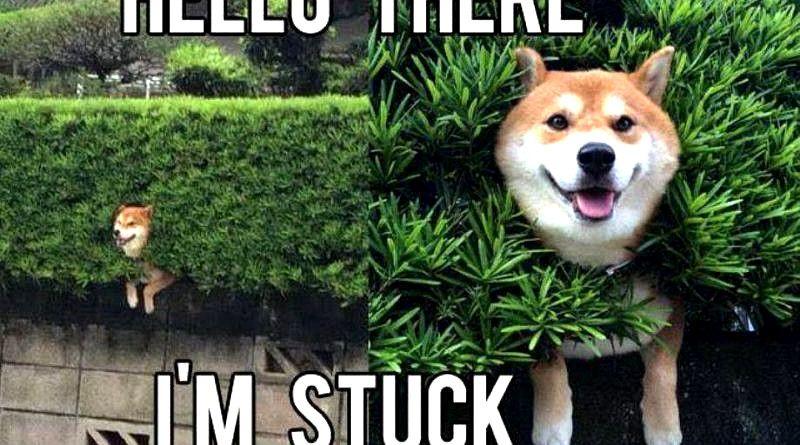Laughing So Hard Dog Meme Dog Meme Book Funny Animals Funny Animal Pictures Dog Memes