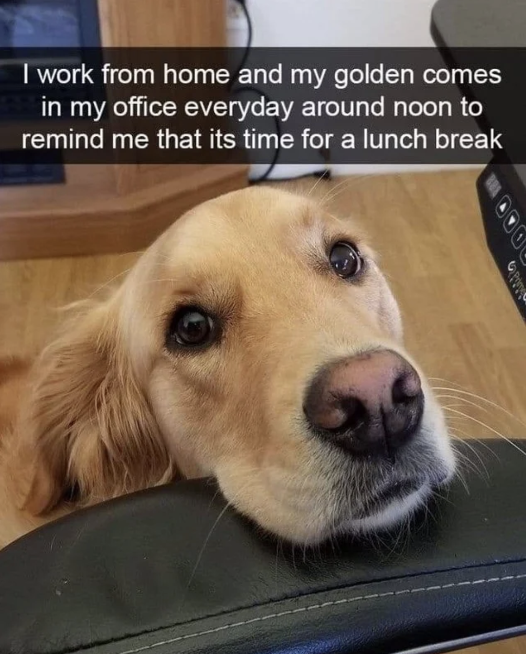 Here's A Bunch Of Examples Of Golden Retrievers Just Being Really, Really Adorable