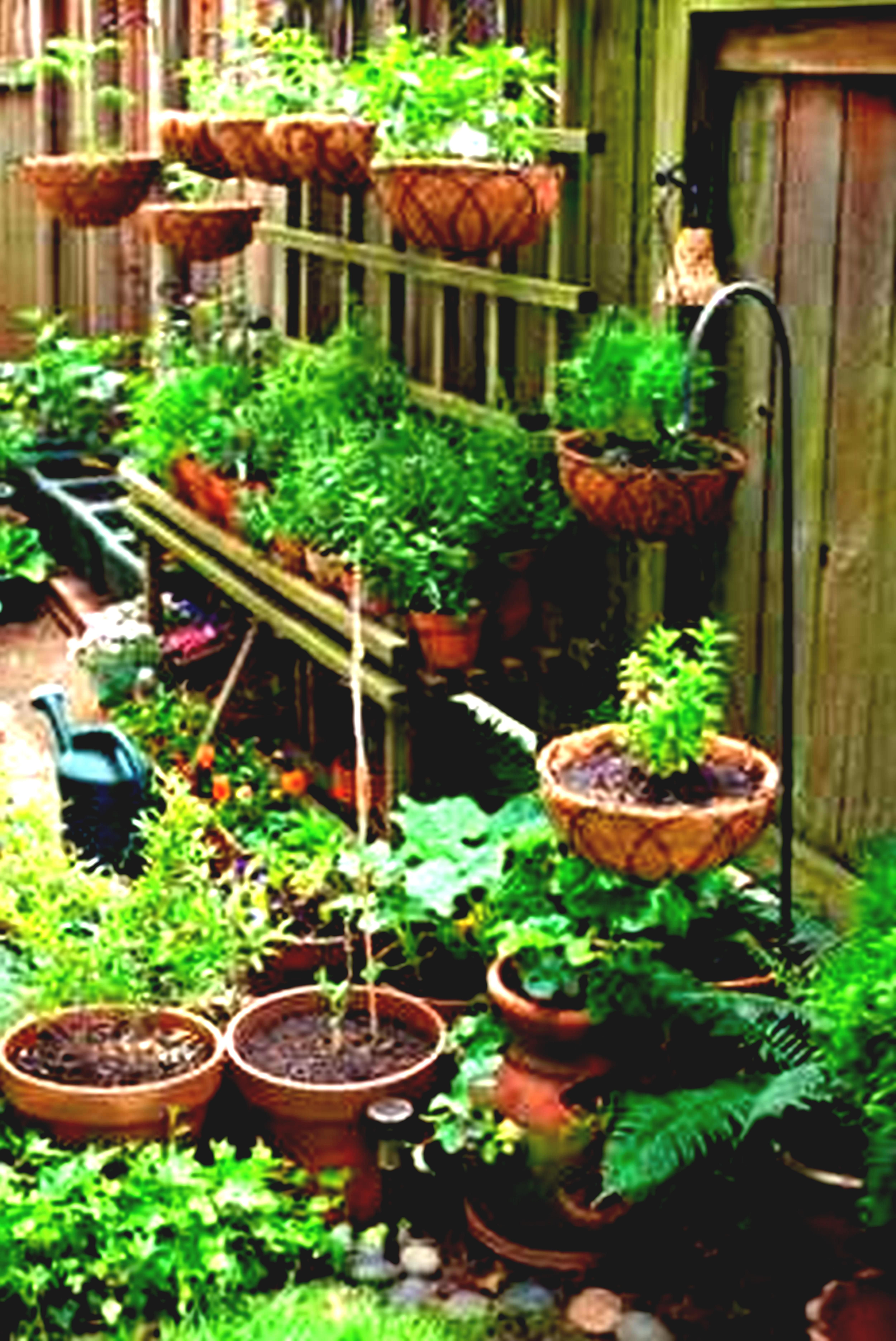 Perfect Container Gardening Ideas For Small Spaces Small Patio
