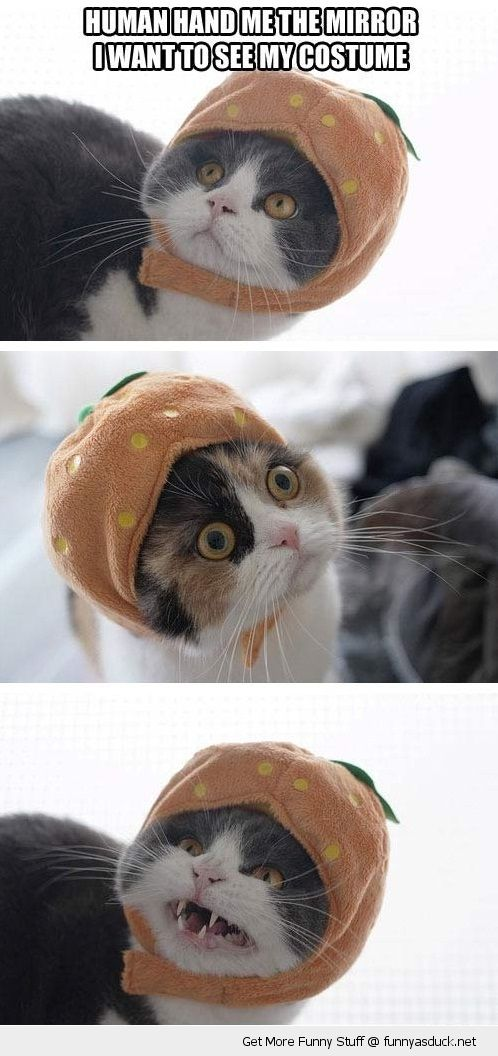 funny cat halloween costumes funny halloween catfunny happy birthday sayings for facebook - Funny Cat Halloween