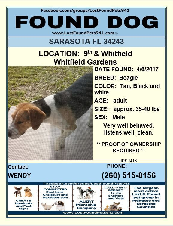 Do You Know Me Lost Dog Found Beagle Please Rt