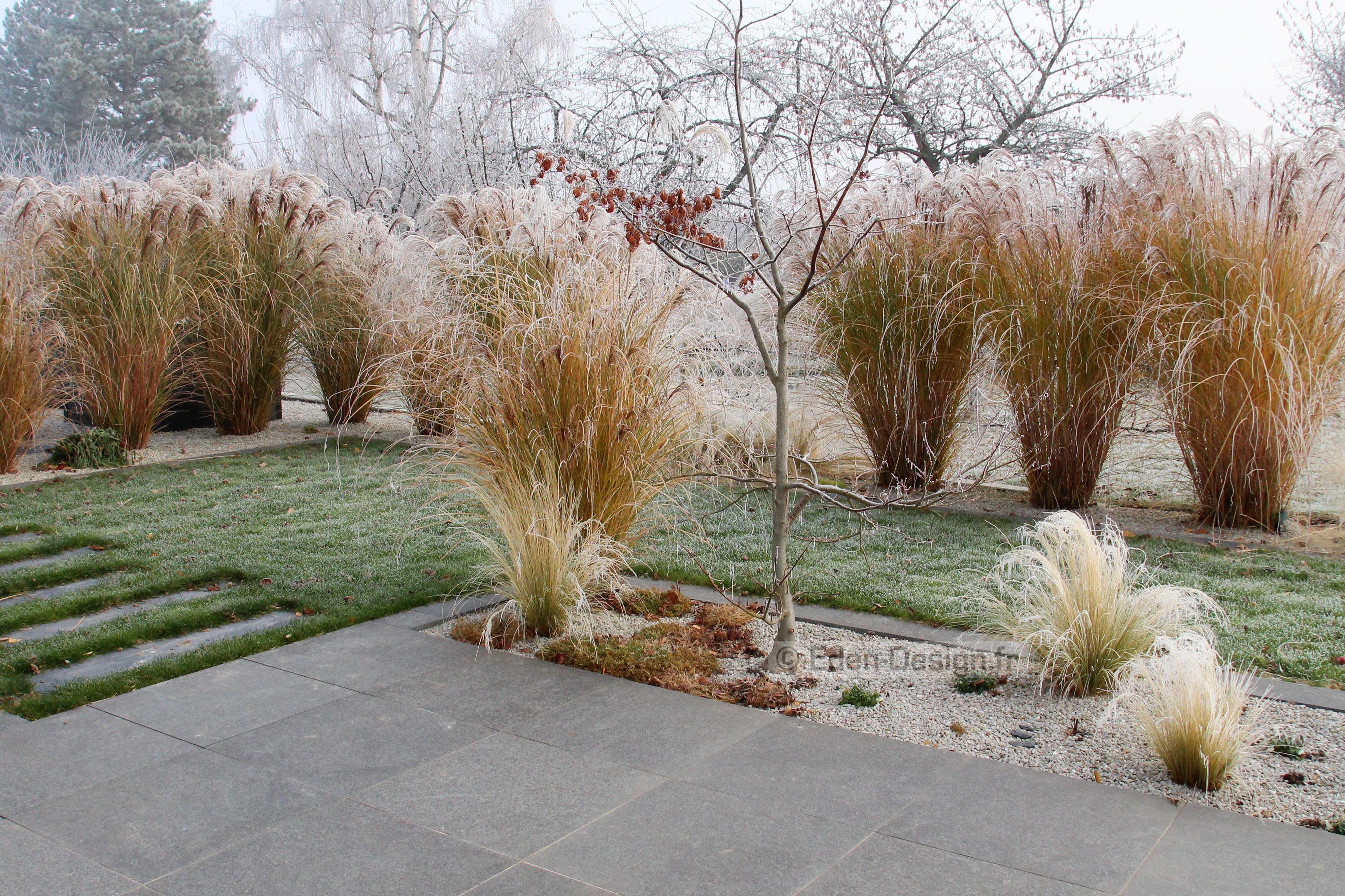 Jardin en hiver terrasse avec graminées miscanthus sinensis