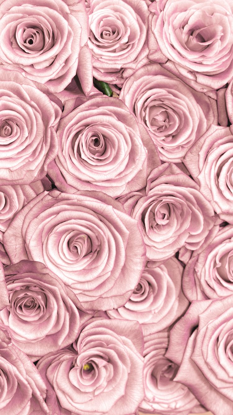 Tap and get free app stylish pink roses close up - Rose gold background for iphone ...