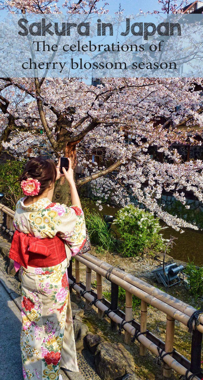 Cherry Blossoms Sakura In Japan Cherry Blossom Japan Japan Travel Destinations Japan
