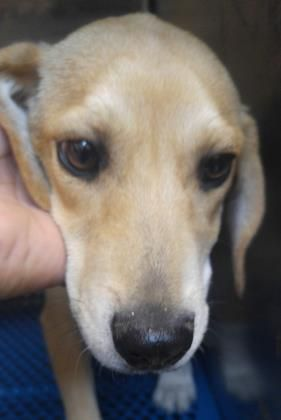 35310033 Located In El Paso Tx To Be Destroyed 6 10 17 A Dogs