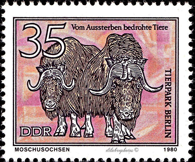 German Democratic Republic. ANIMALS. MUSK OXEN. Scott 2118