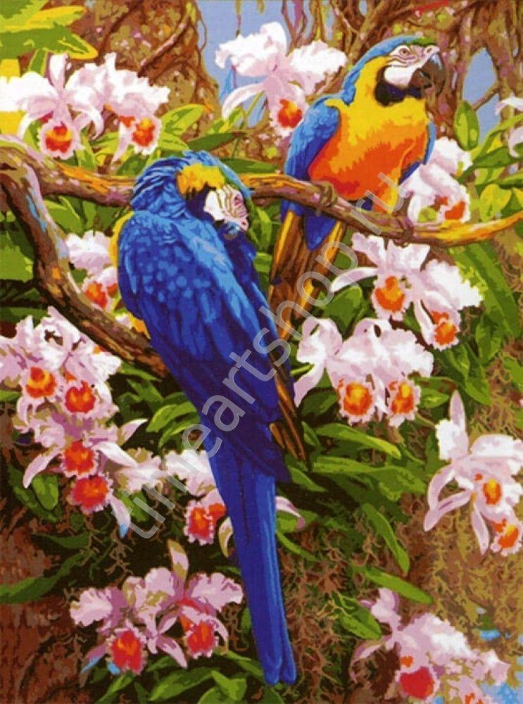 Попугаи и орхидеи, картина раскраска по номерам, своими ...