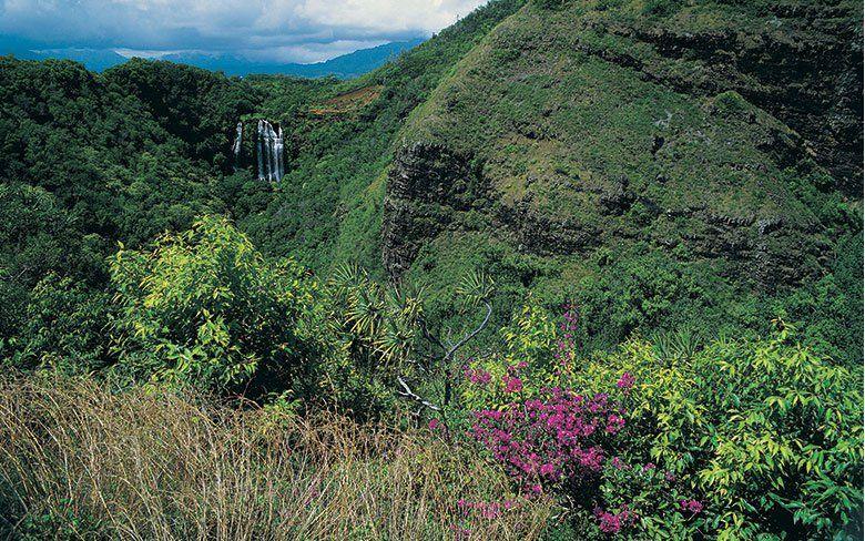 Monthly Garden Calendar For Hawaii